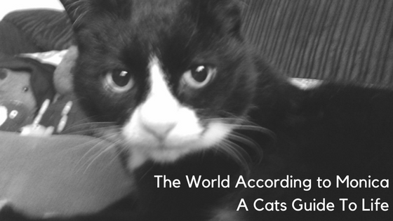 The World According to Monica – A Cats Guide to Life